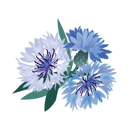 fiordaliso: bouquet di fiori illustrazione vettoriale blu fiordaliso