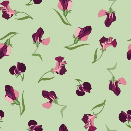 floral seamless pattern with lilac and pink flowers sweet peas Vector