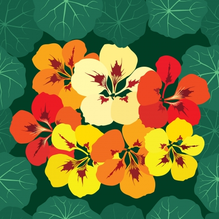 seamless pattern background with multicolor bouquet of flowers nasturtium  Vector