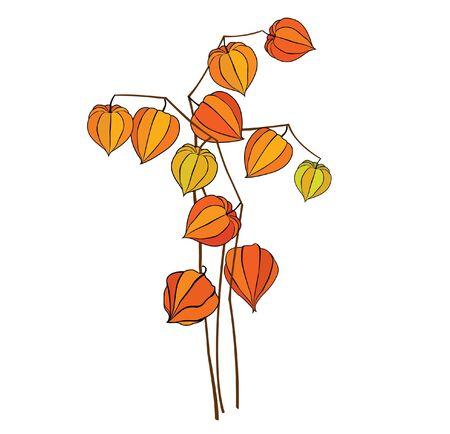 winter cherry: autumn white winter cherry bouquet