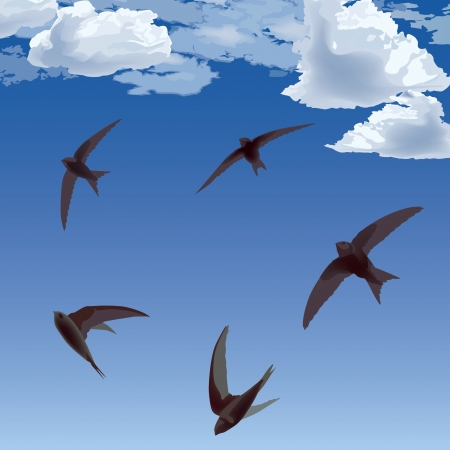 bird realistic background  flying swifts in the sky  Vector