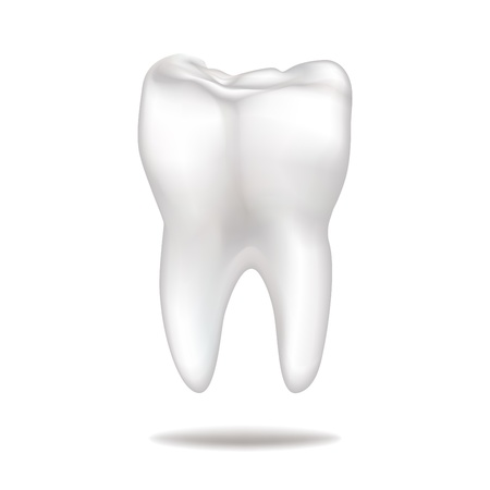 tooth root: Tooth Illustration
