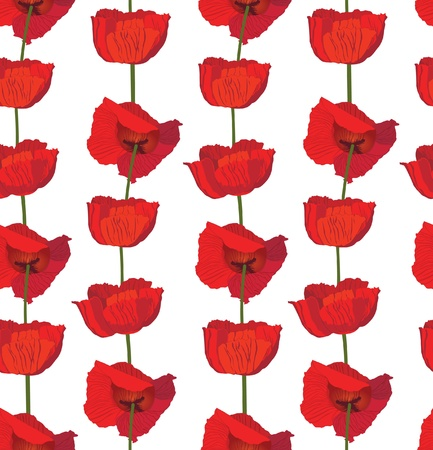 flower poppy seamless  background  Elegant floral pattern   Vector