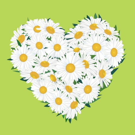 white flower chamomile bouquet isolated  love heart shape   Vector