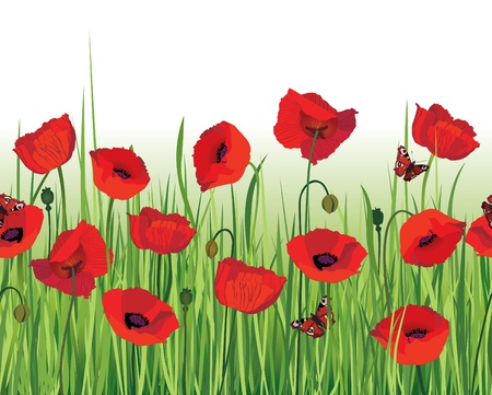 poppy field: Flower poppy seamless border  White seamless background  Grass, flowers, butterfly  Floral decor edge  Summer