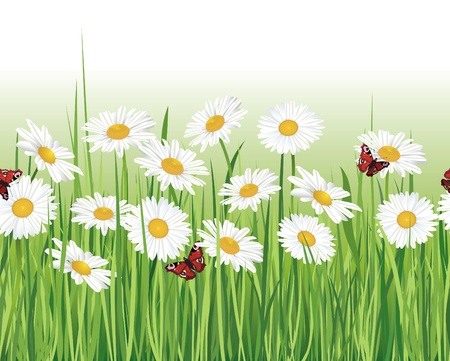 Flower chamomile seamless border  White seamless background  Grass, flowers, butterfly  Floral decor edge  Summer   Vector