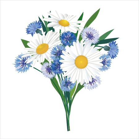 cornflower: Flower bouquet isolated  Chamomiles and cornflowers  Illustration