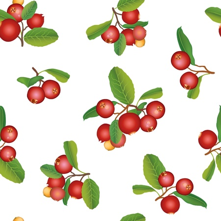 cranberry illustration: Cranberry seamless background  Fresh berry brunch isolated  Scandinavian texture