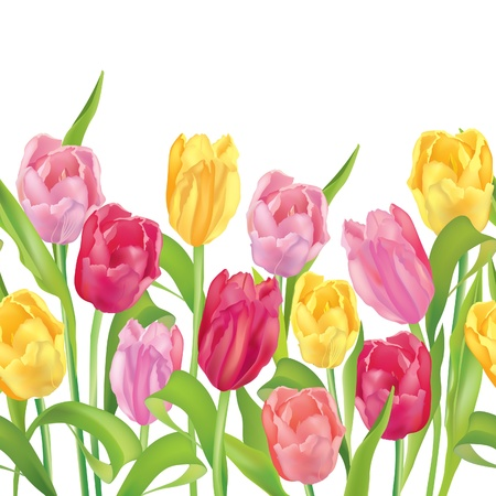 Flower border seamless  Tulips flower garland on white background  Flower bouquet  Tulips bouquet isolated   Vector