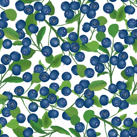 Blueberry bush seamless background  Berry pattern Vector