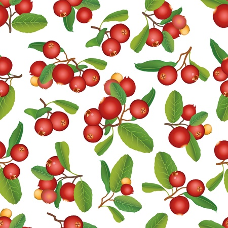 Cranberry seamless background  Vector