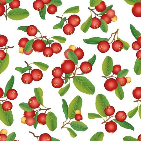 aronia: Cranberry seamless background