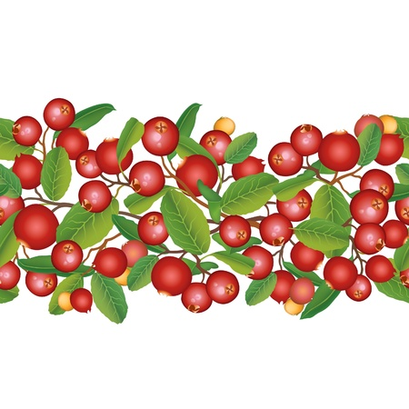 Cranberry seamless border  Berry garland  Ripe red cranberries with leaves  Scandinavian pattern  Cowberries  illustration   Vector