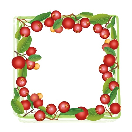 aronia: Cranberry frame  Berry round garland  Ripe red cranberries with leaves  Scandinavian card  Cowberries  illustration