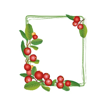 cranberries: Cranberry frame  Berry round garland  Ripe red cranberries with leaves  Scandinavian card  Cowberries  illustration