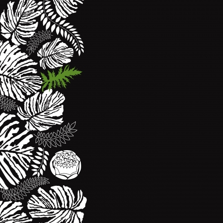 hibiscus background: Floral black and white background  Leaves silhouettes border   Illustration