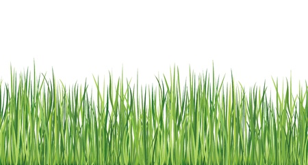 Grass seamless border   Illustration Stock Vector - 18524391