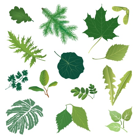 Isolated leaves  set  summer nature decor   Vector