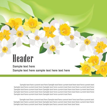 daffodil: Flower daffodil background  Floral spring header border vector illustration