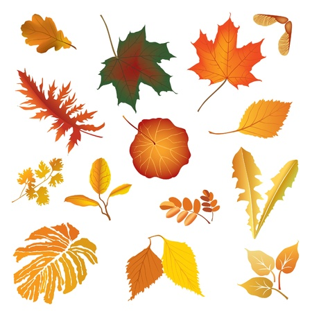 fern leaf: Autumn leaf vector set  Falling leaves illustration