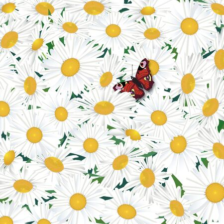 Floral summer background  White Flower chamomile with butterfly photo
