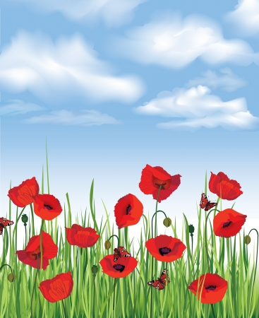 Blue sky with clouds, grass, flowers poppy and butterfly  Spring background