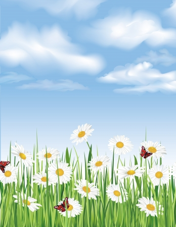 Blue sky with clouds, grass, flowers chamomile and butterfly  Spring background  Stock Vector - 19335243