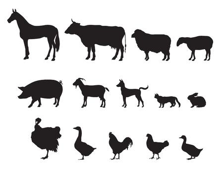농장 동물의 벡터 설정 가축 일러스트