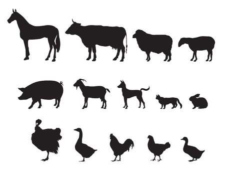domestic cattle: Farm animals vector set  Livestock   Illustration