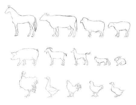 poult: Farm animals sketch set