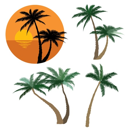 Set of various palm trees  Objects isolated  Tropical sunset beach with palm trees icon  Vector tropical collection   Vector