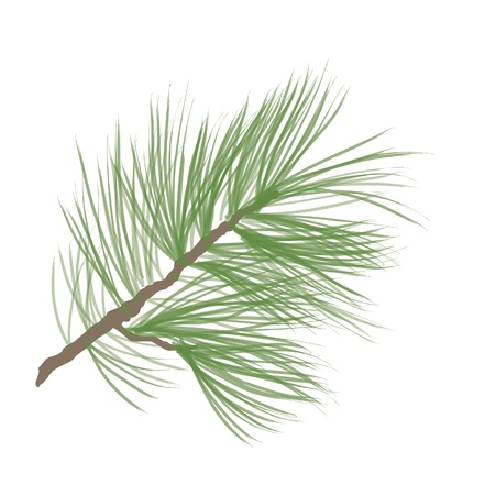 pine needle: Pinecone Collection  Illustration
