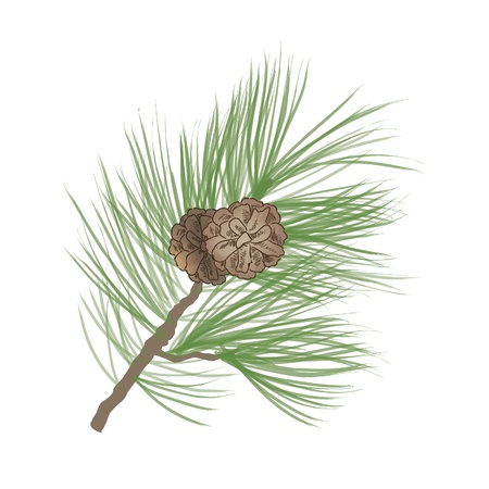 pinecone: Pinecone Collection  Illustration