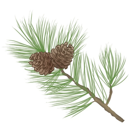 Pinecone Collection  Illustration