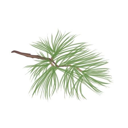 pine needle: Pinecone Collection  Illustration