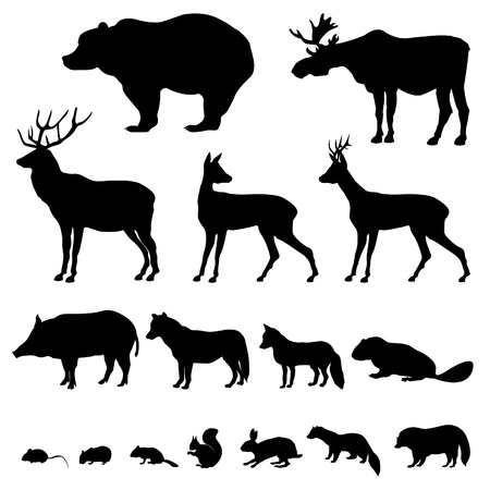 castor: Los animales que viven en el bosque europien conjunto Vector de la silueta aislados sobre fondo blanco Vectores