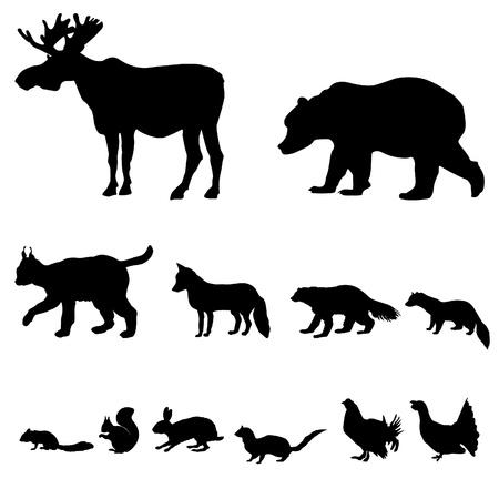 тундра: Животные, живущие в тайге векторный набор силуэт, изолированных на белом фоне Иллюстрация