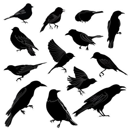 rúdon ülés: Állítsa be a madarak sziluett vektor illusztráció