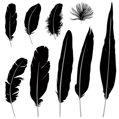 feathers: Feather set illustration isolated over white background