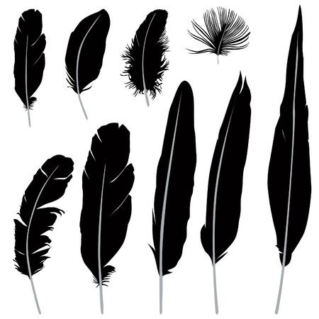 piuma bianca: Feather set illustrazione isolato su sfondo bianco