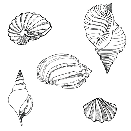 Shell hand drawn vector set  Vector