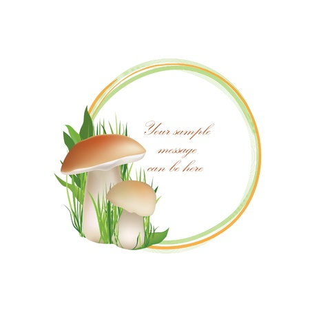 edible: Mushrooms frame isolated over white background  Boletus floral summer border set  Forest background with copy space