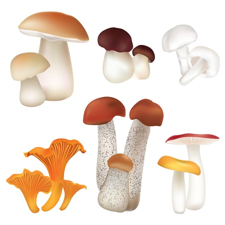 boletus: Mushroom icons set  Boletus isolated over white background vector colorful collection