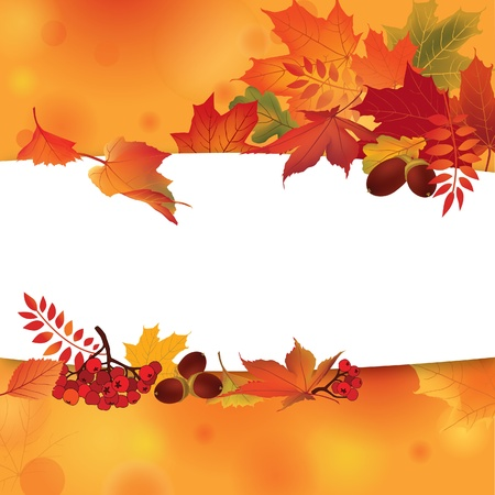 curled up: Autumn background with leaves and rowan  Back to school  Vector illustration  Fall set