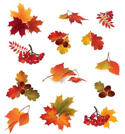 가을 아이콘 설정 가을 잎과 열매 자연 기호 벡터 컬렉션 흰색 배경 가을 세트에 고립