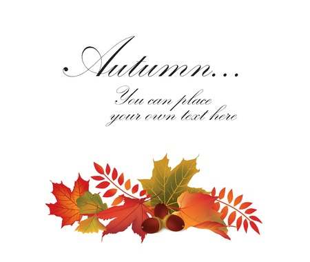 Autumn maple leaf vector frame with copy space on white background  Fall set