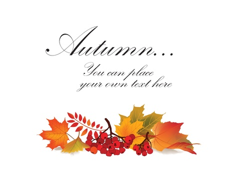 fall leaf: Autumn maple leaf vector frame with copy space on white background  Fall set