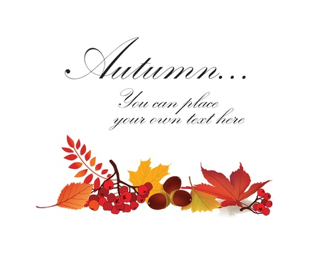 Autumn maple leaf vector frame with copy space on white background  Fall set Stock Vector - 22204547