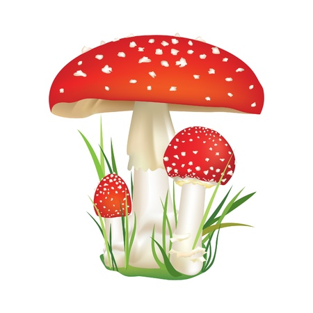 inedible: Red poison mushroom isolated on white background  Vector illustration set