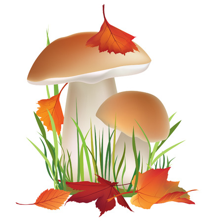 a fly agaric: Autumn icon set  Fall leaves and mushrooms in grass  Nature symbol vector collection isolated on white background  Mushroom vector illustration collection   Illustration